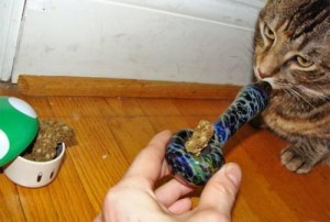cat_34