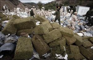 1308149296_1298301757_confiscated-marijuana-13