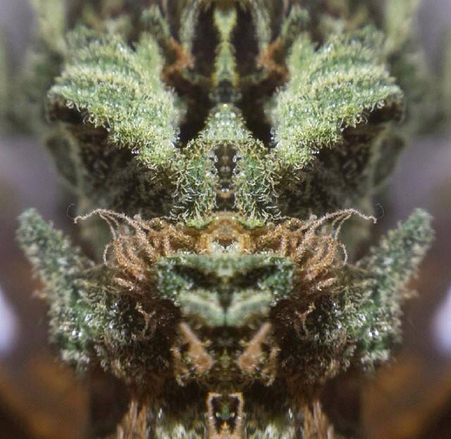 Прикольные картинки на тему марихуаны семена конопли у шишкина