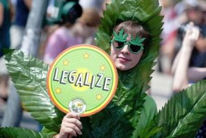 легализация конопли